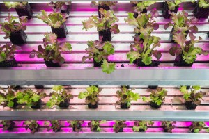 UrbanAgriculture
